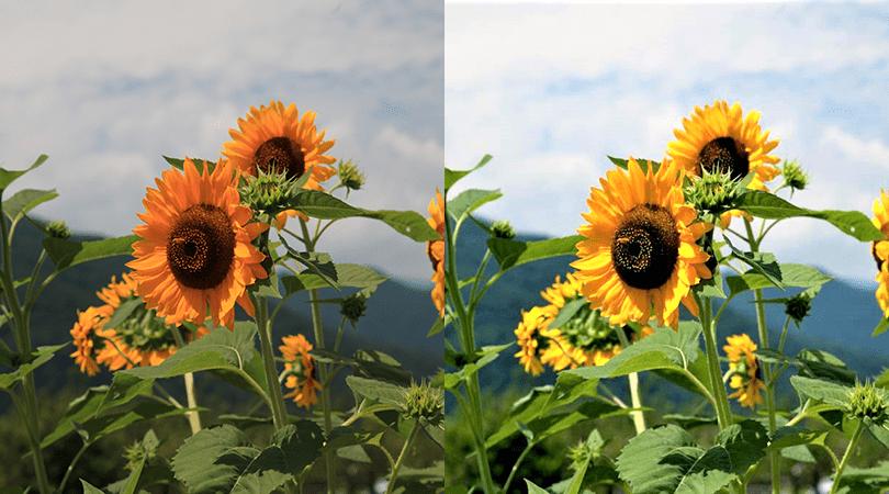JPEG保存じゃダメなの?「RAW」で拡がるデジタル写真の世界のイメージ画像