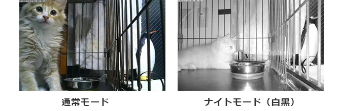 導入効果の所感 画像01